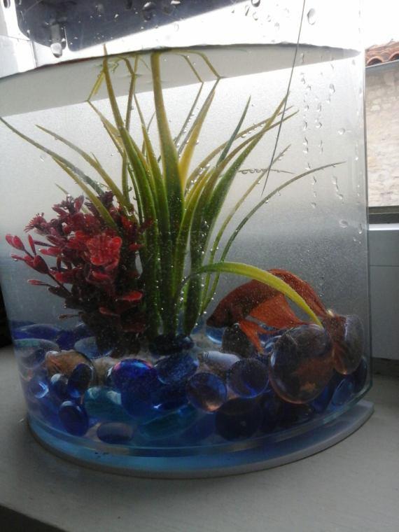 Nouveau poisson chez maman!!!!