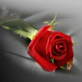 ma plus belle fleur d 39 amiti de l 39 amour a celui ki visite mon blog blog de girl qjesui. Black Bedroom Furniture Sets. Home Design Ideas