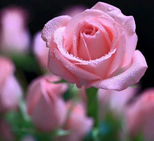 de toute les fleurs tu es la plus belle dans le jardin de mon coeur on ne voit qu 39 elle blog. Black Bedroom Furniture Sets. Home Design Ideas