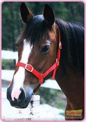 Comanche le cheval de stevie de grand galop blog de - Grand galop le cheval volant ...