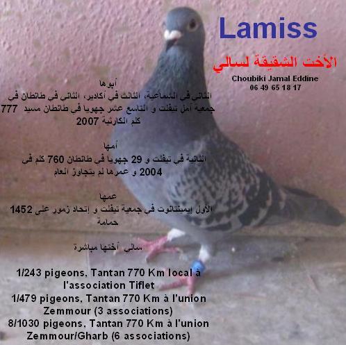 La base: Lamiss