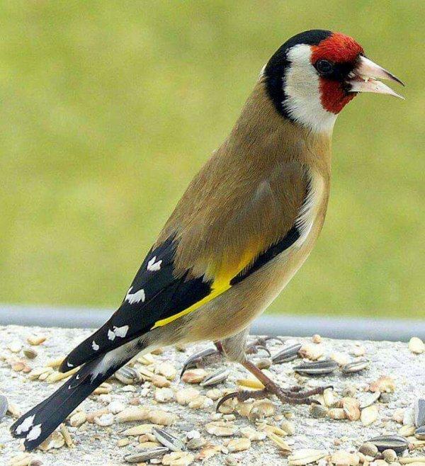 Quelques beaux oiseaux