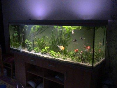Mon aquarium poissons rouges japonais une belle histoire for Aquarium poisson rouge nettoyage