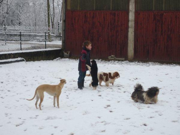 Et voici encore des photos de la meute dans la neige