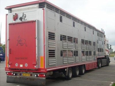 Des porcs viennent d'être chargés depuis un centre de tri breton.