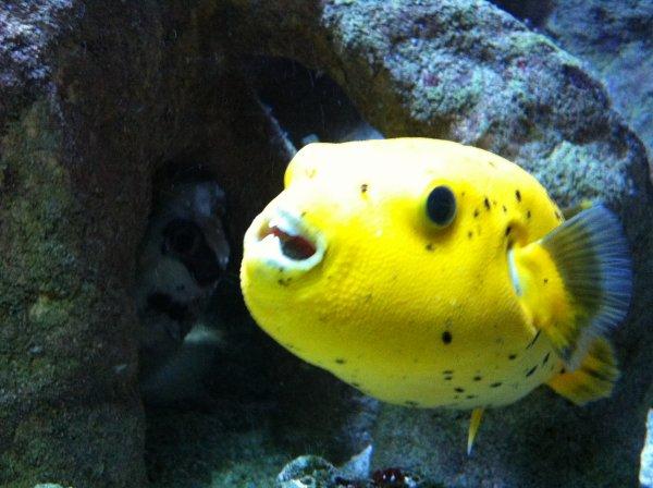 224 l aquarium et au zoo d amn 233 ville de sourismoi54