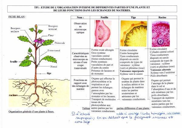 Th me 1 a la vie fix e chez les plantes r sultat de l for Plante 21 svt