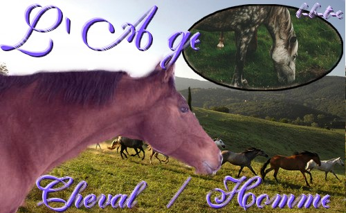 âge cheval / homme