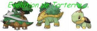 Evolution de torterra blog de amour pokemons - Evolution tortipouss ...