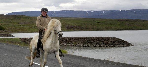 Un cheval sur la route