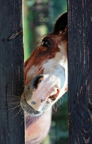 Un cheval cachottier