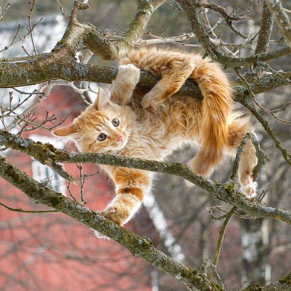 Un chat acrobate