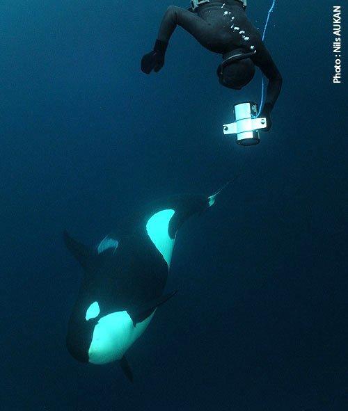 Une orque et un homme (2/2)