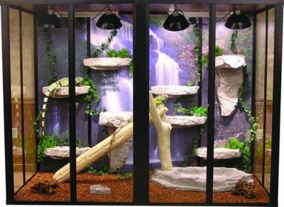 la taille du terrarium pour un iguane iguane vert et autre lezards. Black Bedroom Furniture Sets. Home Design Ideas