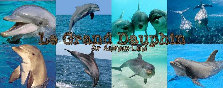 Article N°17__Le grand dauphin__Sur Aniimaux-land.skyrock.com