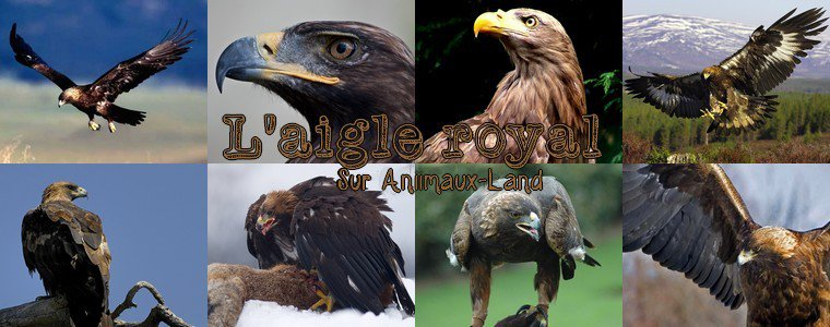 Article N�2o__L'aigle royal__Sur Aniimaux-land.skyrock.com