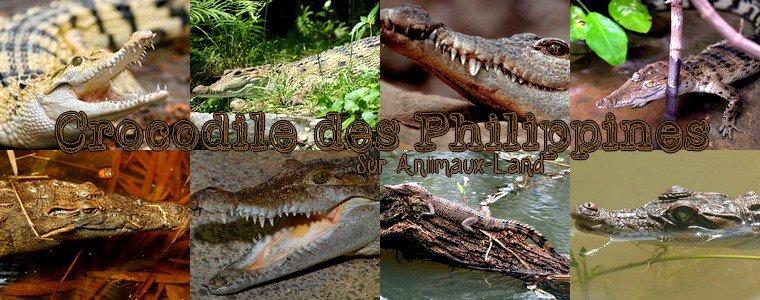 Article N°22__Le crocodile des Philippines__Sur Aniimaux-land.skyrock.com