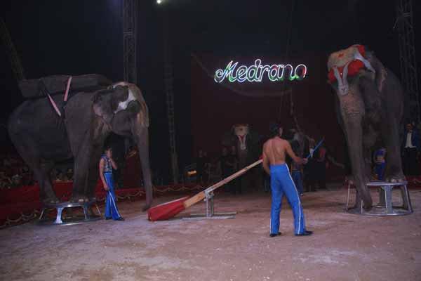CIRQUE MEDRANO : LE SPECTACLE 19