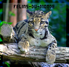 Felins-Du-Monde