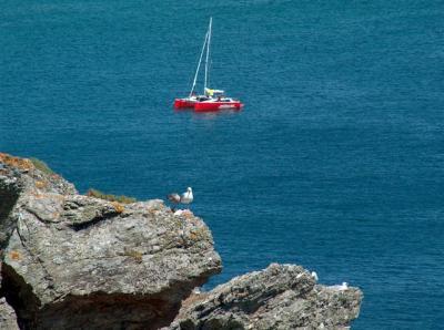 c'est l'histoire de deux Goelans et d'un catamaran