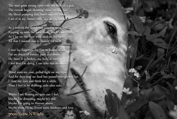 En m�moire de tous les l�vriers tortur�s ..... en f�vrier  RIP   votre souffrance � vous l�vriers est la n�tre aussi, nous mettons tout en oeuvre, pour vous d�fendre, vous prot�ger, faire voter des lois, adopter pour vous �viter cette fin funeste... pardon de n'y �tre pas encore arriv�s, mais cette larme au coin de vos yeux, sont nos pleurs � nous, on vous aime tous