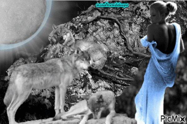 INSOLITE : Le Lykoi, nouveau ph�nom�ne de mode des chats loups