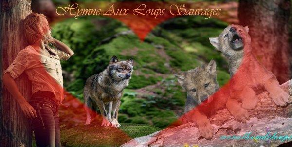 � Femmes qui courent avec les Loups � La Femme Sauvage  Extraits du livre de Clarissa Pinkola Est�s