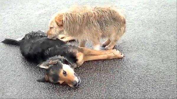 ANIMAUX – Leur mort, les animaux ont aussi une �me