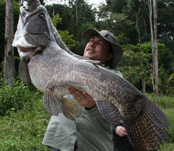Poisson Mystère pris par Olivier en Guyane (en eau Douce), devinez le nom du poisson ????