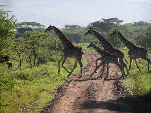 Parc National du Serengeti (Tanzanie)