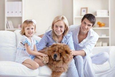 CHAPITRE 1: Article 1: Le chien, un animal de meute / hi�rarchie avec les ma�tres.