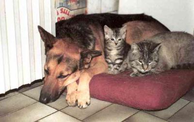 un chien et deux chats qui dorment ensemble