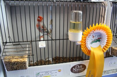 Mundial Ornitología Almeria 2012