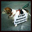 Photo de contre-tortures-animaux
