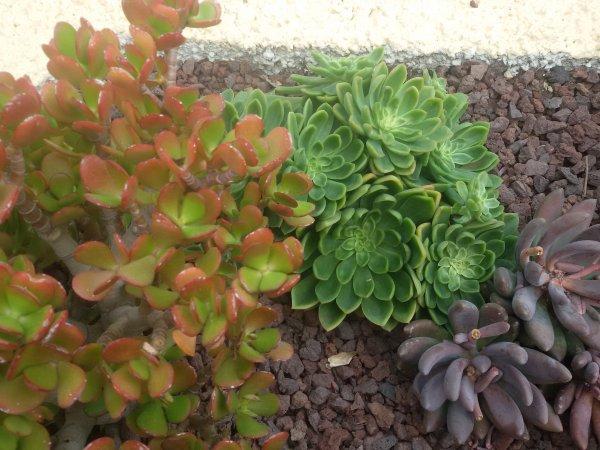 Pour celles qui aiment les plantes grasses.