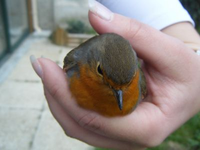 Un petit oiseau marion for Un petit oiseau