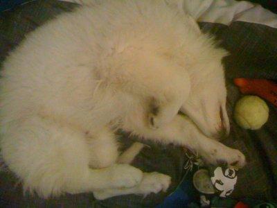 Ma bouille, Un dormeur professionnel !! ♥