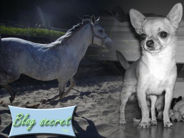 Blog secret