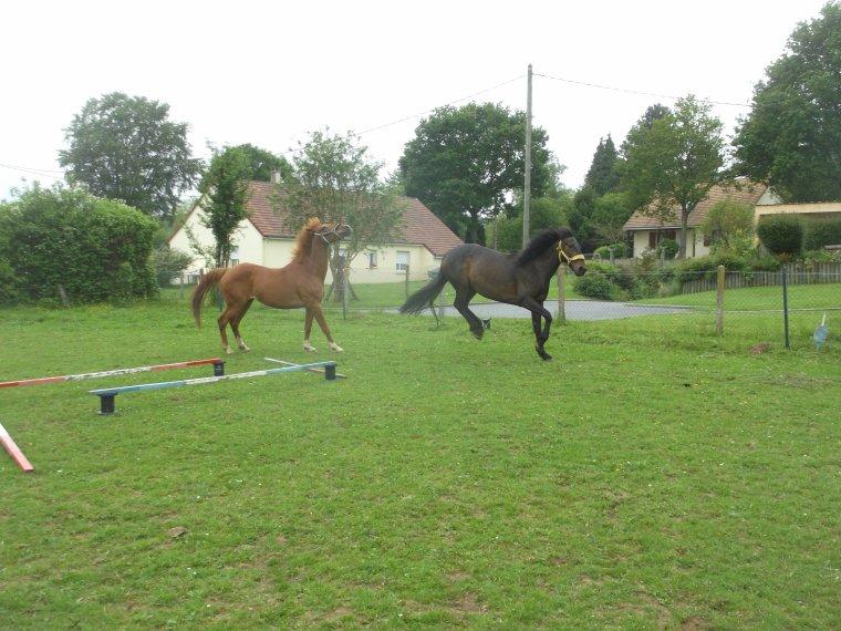 """""""Les chevaux ne changent ni notre vie, ni nous-m�me. Ils nous proposent seulement de nous reconnecter � la r�alit�, � ce que nous sommes. A ce que l'autre est. Et � accueillir cela, sans jugement."""""""