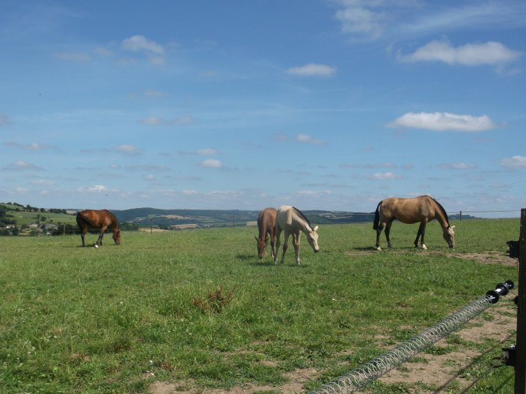 'Tous les cavaliers, si ils durent assez longtemps, apprennent que l'�quitation est sous toutes formes un sport � vie et de l'art, un effort qui est � la fois familier et nouveau � chaque fois que vous prenez le cheval de son �curie ou de son pr�.'