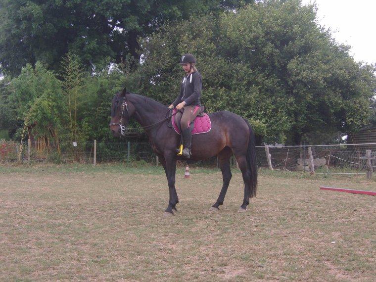 """""""L'équitation, c'est ça. C'est un grand compromis entre deux espèces parfaitements opposées. C'est aux désirs de l'Homme que le cheval est forcé de se plier, c'est donc à l'Homme de s'adapter et de pouvoir aux besoins de son équidé."""""""