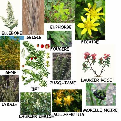 les plantes toxiques 2eme partie hom opathie et. Black Bedroom Furniture Sets. Home Design Ideas