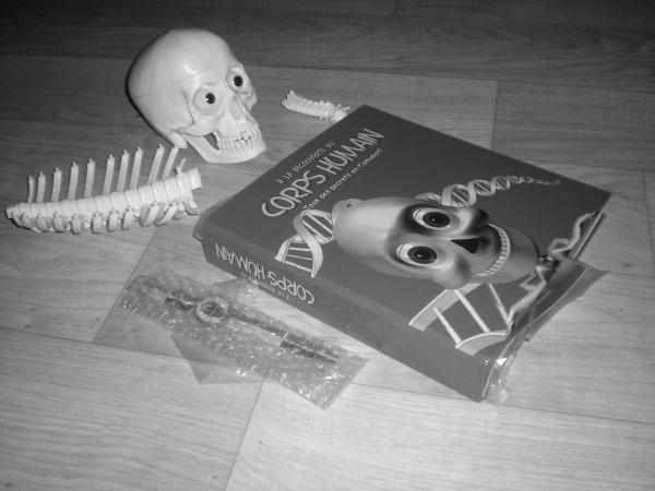 ma collection squelette humain p ma vie avec ma scoliose. Black Bedroom Furniture Sets. Home Design Ideas