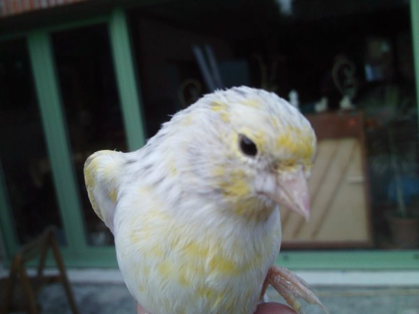 agate pastel jaune mosaique n°274