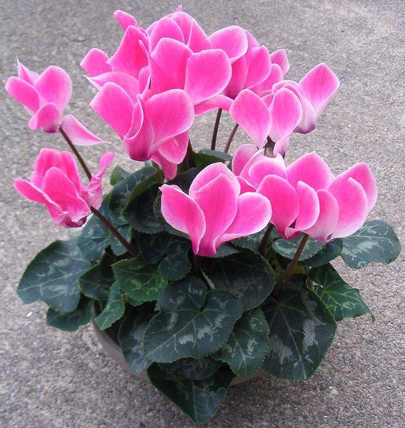 Attention les plantes toxiques pour les animaux au for Plante au jardin