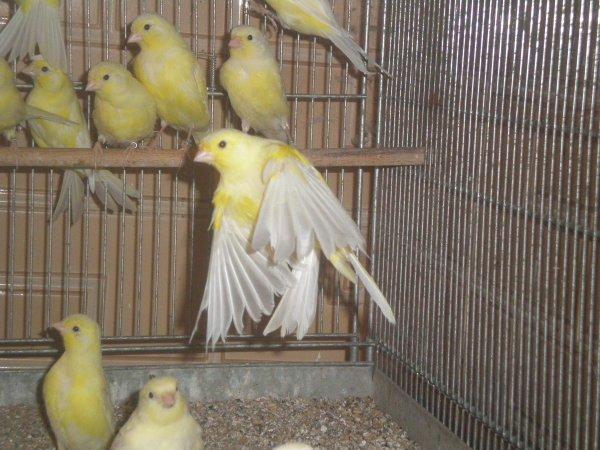 lipos jaunes les 15 selectionn�s