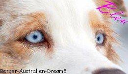 Le Berger Australien en couleur