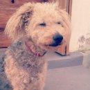 Photo de Tchoupie-chiens