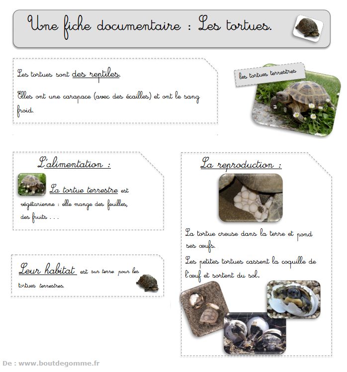 Carte d'identité d'une tortue terrestre et les dangers de