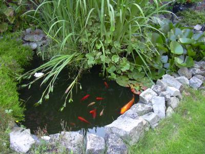 Bassin de jardin poisson rouge bassin de jardin for Alimentation poisson rouge dans un bassin